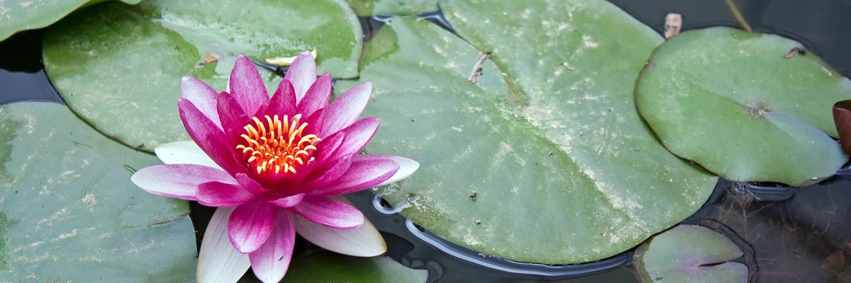 Sandti Lotus Flower